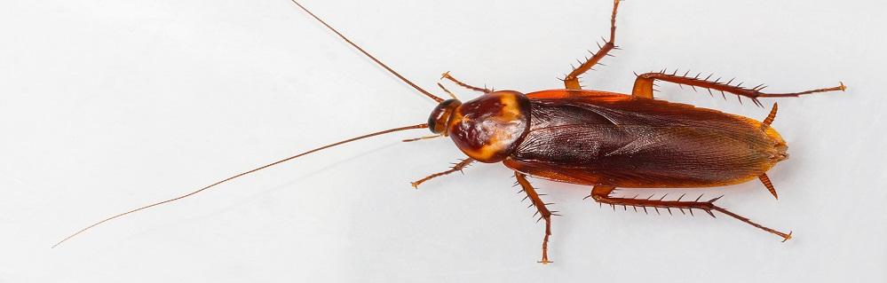 Дезинсекция от тараканов ПроКомфорт