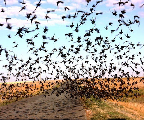 Борьба с птицами от ПроКомфорт